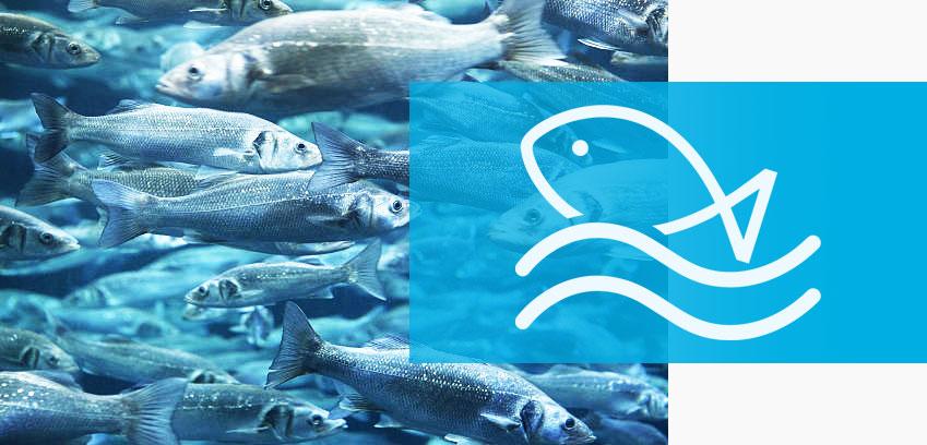 Tratamientos de ozonización para acuicultura