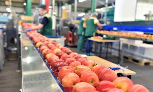 generadores de ozono almacén alimentos