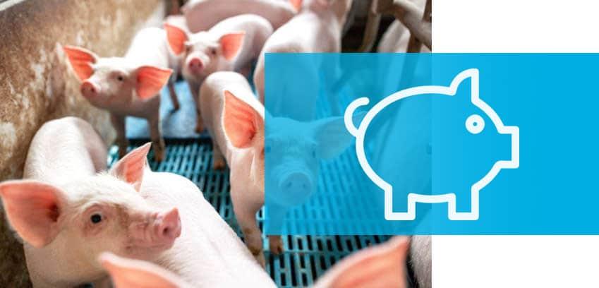 Tratamientos de ozonización ganadería