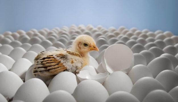 ozono para sector avícola