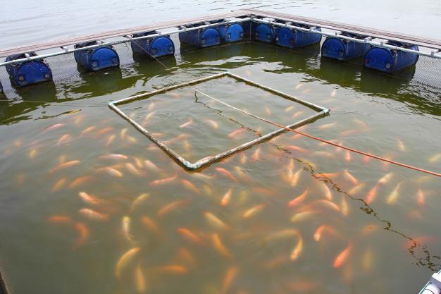 ozono para mejorar la calidad del agua en piscifactorías
