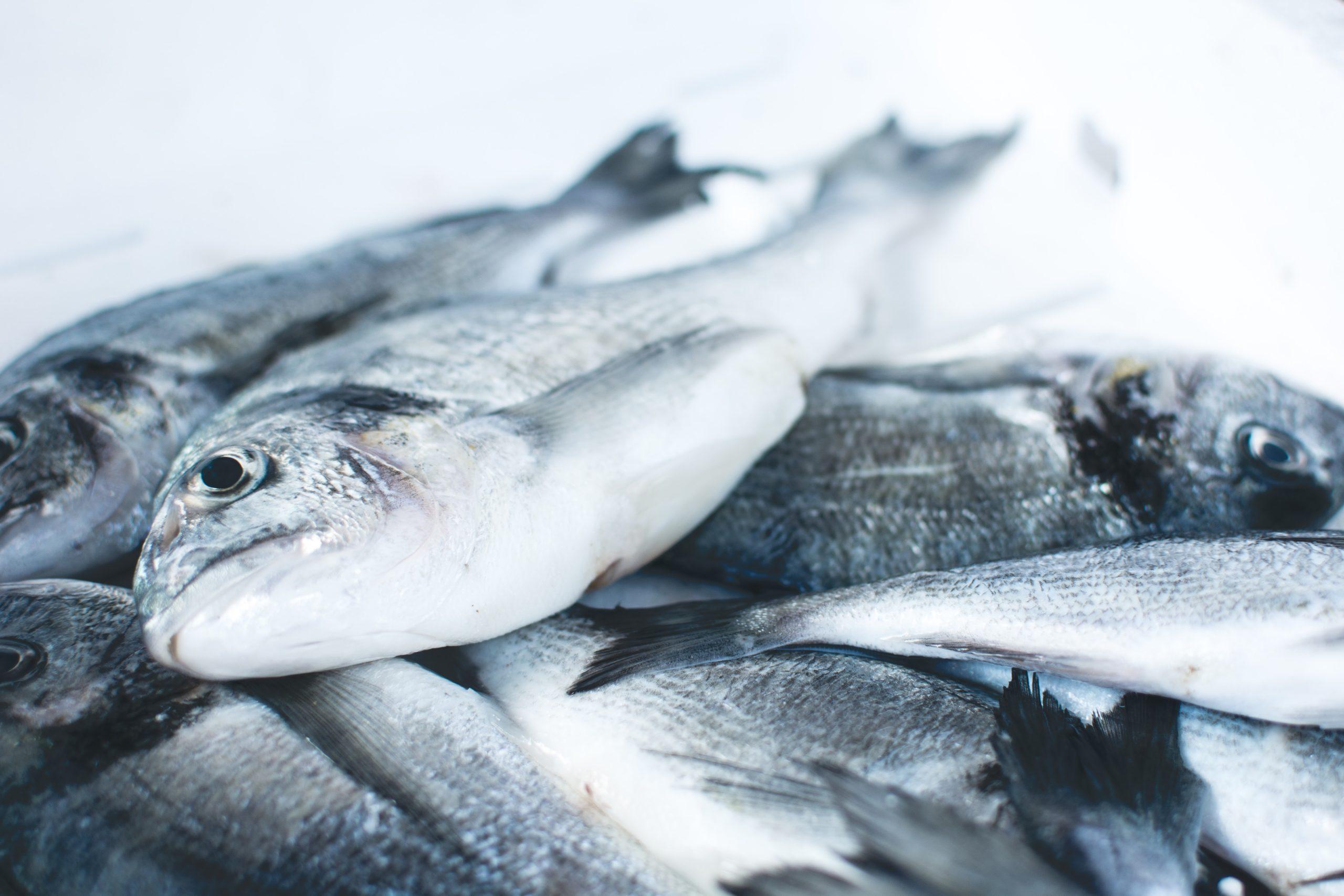 Higiene con ozono en pesca de mar abierto