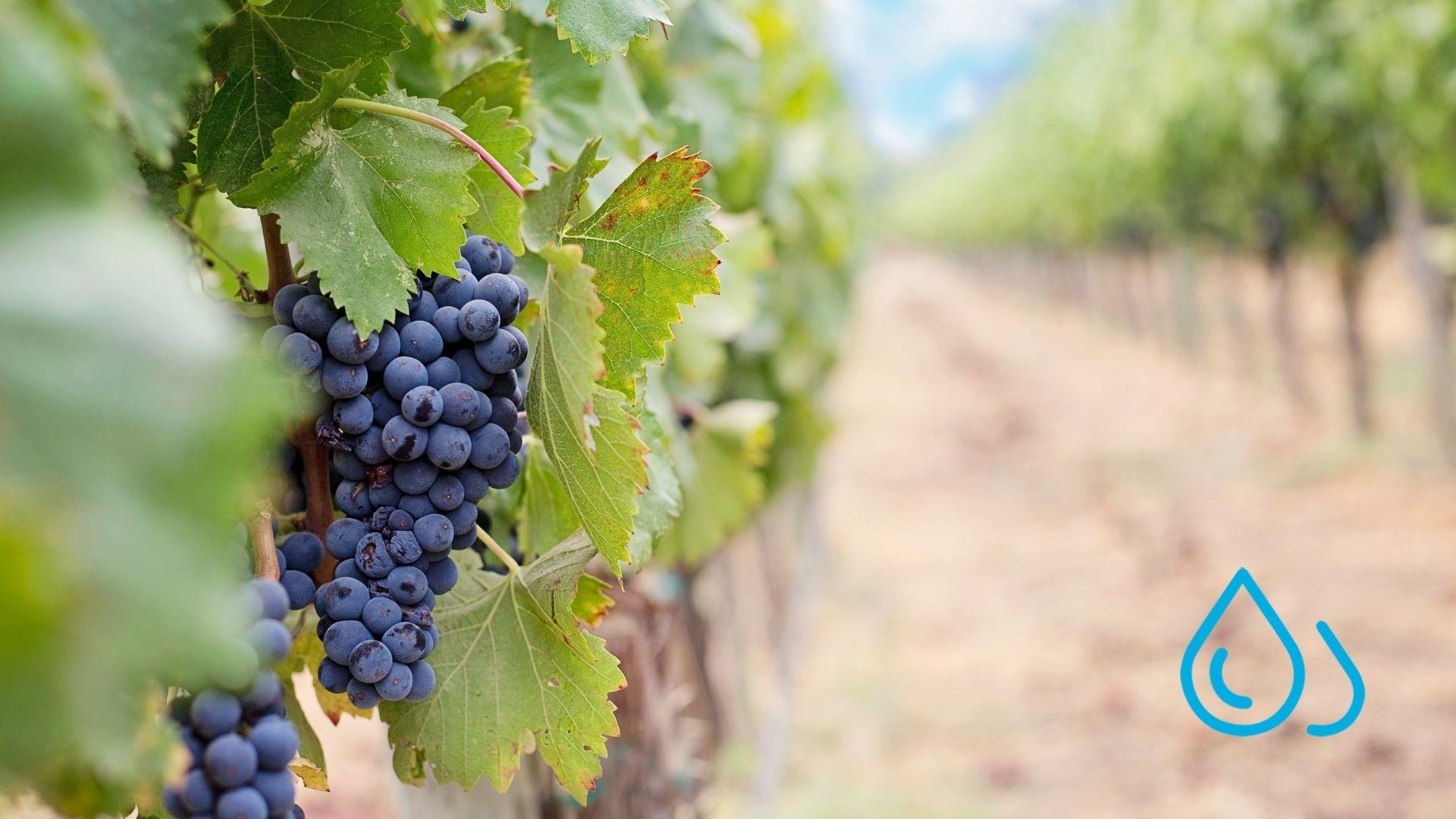 tratamiento ozono viña